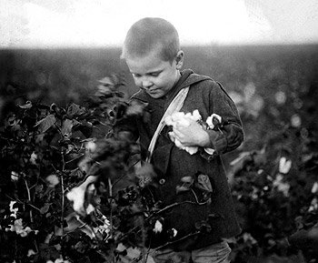 Boy Picks Cotton, Waxahachie, Texas, by Lewis Hine, 1913 Photograph