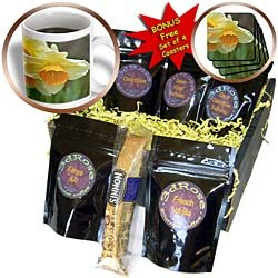 PS Flowers - The View - White and Orange Daffodil Flower - Spring Photography - Coffee Gift Baskets - Coffee Gift Basket