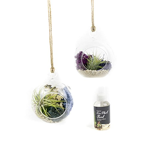 MakersKit Air Plant Terrarium Hanging Vases, Set of Two Bubbles + Organic Plant Food