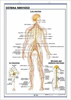 Sistema Nervioso El Encefalo: S.A. Edigol Ediciones and Edigol