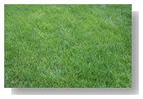 K9 Yard Patch- Super Fast Grass Repair 250SF of lawn!! Dog Urine, Salt, Disease, Heavy Traffic, or Just Plain Neglect.