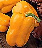 Yellow Sweet Pepper - 115 Seeds - GARDEN FRESH PACK!