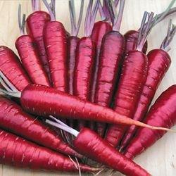 Purple Dragon Carrot Seeds ► Organic NON-GMO Purple Dragon Carrot Seeds (350+ Seeds) ◄ by PowerGrow Systems
