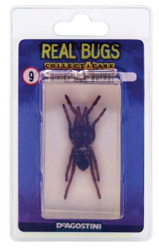 DeAgostini Real Bugs Pack Funnel Bug, Web Spider