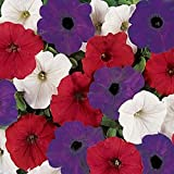 Spreading Red, White, and Blue Petunia Seeds - My Secret Gardens