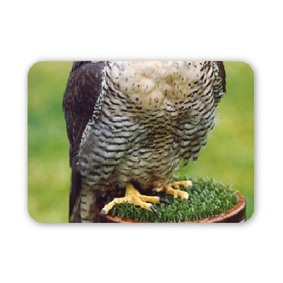 un-falco-pellegrino-tappetino-per-il-mouse-art247-naturale-di-alta-qualita-in-gomma-tappetino-per-il