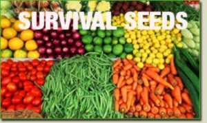 Emergency Food Survival Seed 52 Variety 33,000