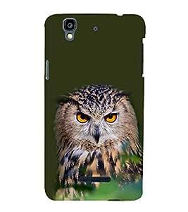 Staring Owl 3D Hard Polycarbonate Designer Back Case Cover for YU Yureka :: YU Yureka AO5510