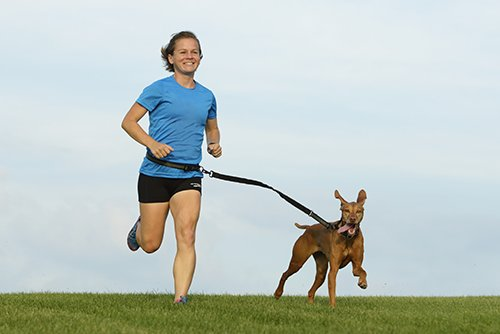 running dog leash reviews