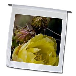 fl_87910_1 Danita Delimont - Deserts - Engelmann Prickly Pear Cactus, Sonoran Desert Arizona - US03 FZU0006 - Frank Zurey - Flags - 12 x 18 inch Garden Flag