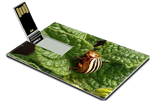 msd-4gb-usb-flash-drive-20-memory-stick-credit-card-size-colorado-beetle-devouring-leaves-of-potato-