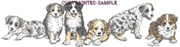 Australian Shepherd - Puppies in a Row by Cindy Farmer