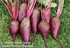 Burpee Beet Cylindra 60760D (Purple) 385 Organic Seeds