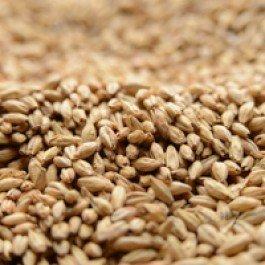 dingemans-aromatic-kiln-uncrushed-malt-1-lb-bag-by-strange-brew