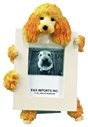 Apricot Poodle Picture Frame Holds Your Favorite 2.5 by 3.5 Inch Photo, Hand Painted Realistic Looking Poodle Stands 6 Inches Tall Holding Beautifully Crafted Frame, Unique and Special Poodle Gifts for Poodle Owners