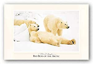 "Bad Boys of the Arctic by Thomas Mangelsen 27.5""x17.5"" Art Print Poster"