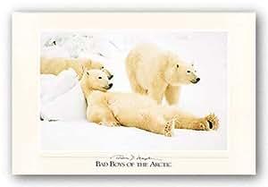 "Bad Boys of the Arctic by Thomas Mangelsen 27.5""x17.5"" Art Print Poster"