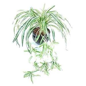 Gd bo balcons gr nlilie kunstpflanze 40 cm for Gd bo balcons