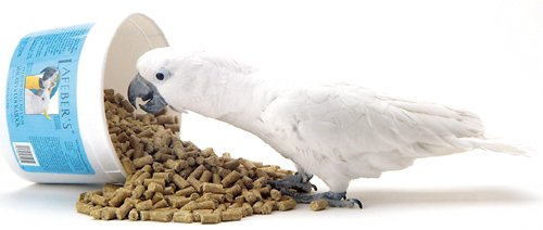 Image of Lafeber's Premium Daily Diet Bird Food, Macaw, 25 lbs (B006WCQP2M)