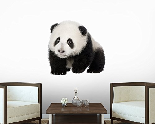 Giant Panda (4 Months) - Ailuropoda Melanoleuca Wall Decal - 24 Inches W X 20 Inches H - Peel And Stick Removable Graphic front-662610