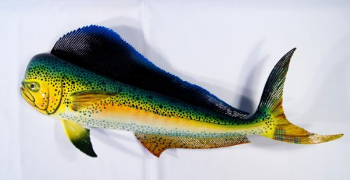 Hand Painted Mahi Dolphin Salt Water Game Fishing Wall Mount Decor 28 (Fishing Wall Mount compare prices)
