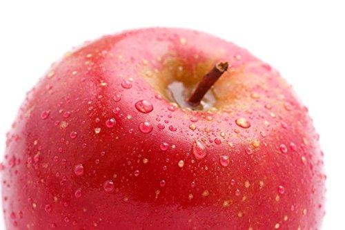 山形県産 訳あり りんご 10kg
