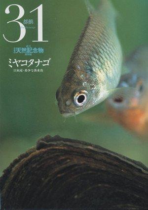 天然記念物「ミヤコタナゴ」違法飼育 → 増えすぎて相談 → 書類送検