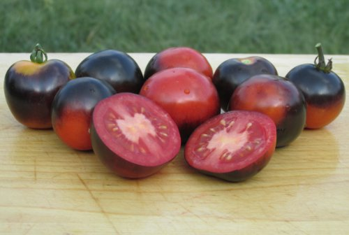 Indigo Rose Tomato Seeds- Organic- Purple/Blue Cherry Variety- 25+ 2016 Seeds (Indigo Tomatoes compare prices)