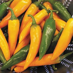 Hungarian Carrot Pepper - 20 Seeds - Great for Frying