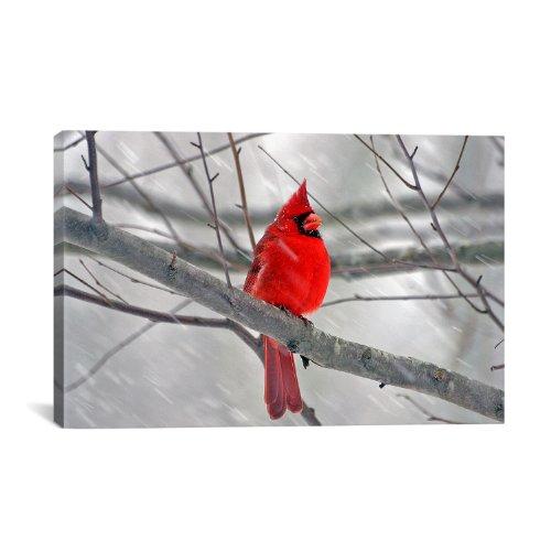 iCanvasART Cardinal Bird Canvas Photagraphy Art Print Picture Canvas Print Wall Art #1 12