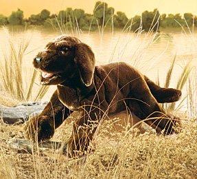 Chocolate Labrador Puppy Puppet