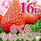 さくらももいちご 徳島県産 16粒 大粒 化粧箱入り ランキングお取り寄せ