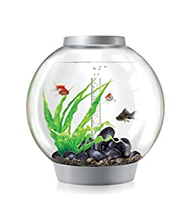 biorb classic aquarium 40 x 42 cm 30 litre silver led light co uk pet supplies