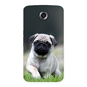 Ajay Enterprises Wowo Pug Dog Grass Multicolor Back Case Cover for Nexsus 6