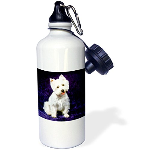 3dRose wb_608_1 Westie Sports Water Bottle, 21 oz, White