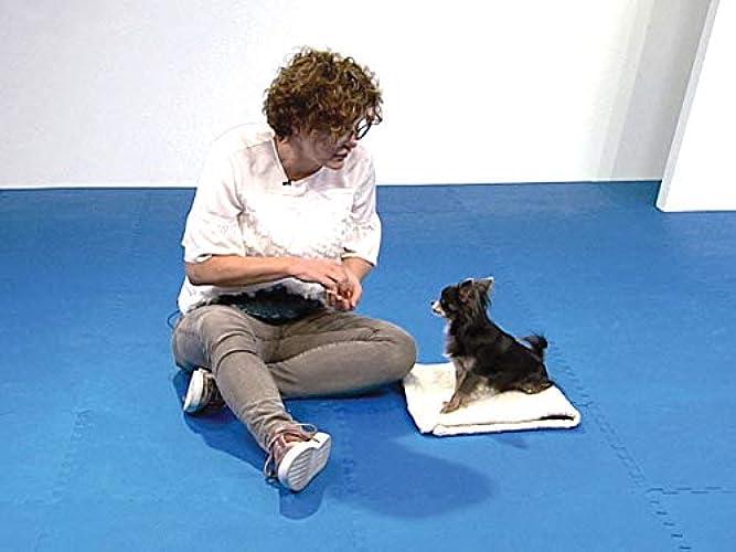 Dog Training 101 Season 1 Episode 3