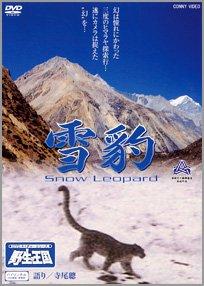 雪豹 Snow Leopard