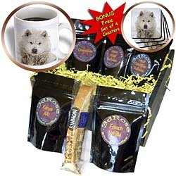 Kike Calvo Animals - Canadian Eskimo Dog Hudson Bay Churchill Northern Canada - Coffee Gift Baskets - Coffee Gift Basket