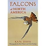 Falcons of North America ~ Kate Davis