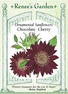 Chocolate Cherry Ornamental Sunflower Seeds