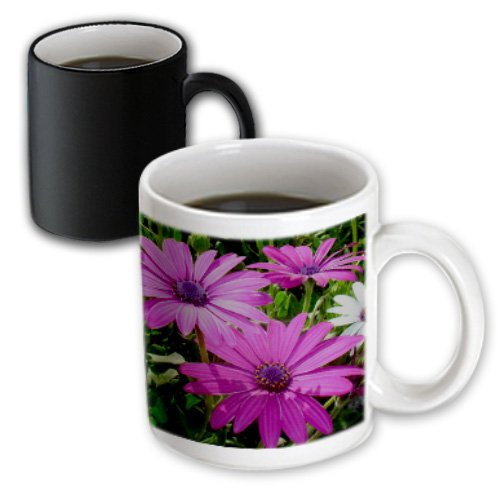 3Drose Flowers African Daisy Magic Transforming Mug, 11-Ounce
