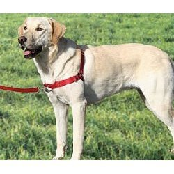 PREMIER Easy Walk Dog Harness Size:Med/Large Color:Raspberry