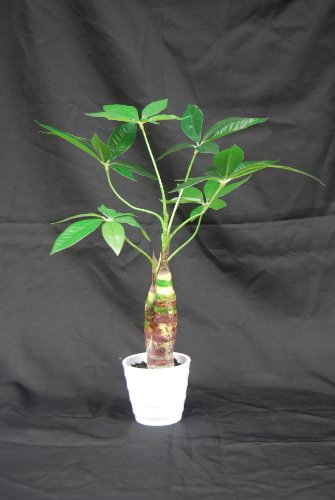 "Money Plant Decoration In Living Room: Hyco 18"" Tall Artificial Money Tree Plant"