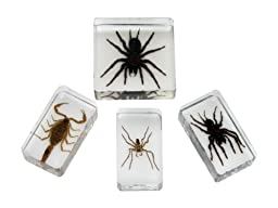 American Educational 4 Piece Molded Plastic Scorpion and Spiders Specimen Set