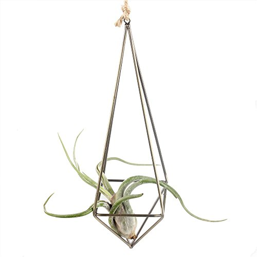 Rustic Style Freestanding Hanging Metal Tillandsia Air Plant Rack Bronze Color 10 inches Height Quadrilateral Pyramid Shape Geometric (Freestanding Plant Hanger compare prices)