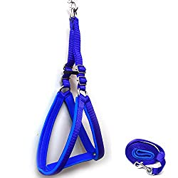 Pawzone Blue Padded Body Harness With Leash 0.75 inches