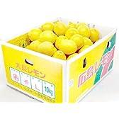 特選広島レモン 【大長レモン】【10kg】