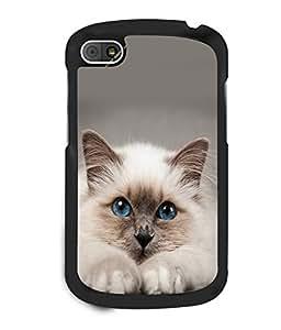 printtech Cute Cat Kitten Blue Eyes Back Case Cover for BlackBerry Q10