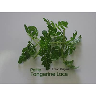 Petite Greens - Tangerine Lace - 4 x 4 oz by For The Gourmet