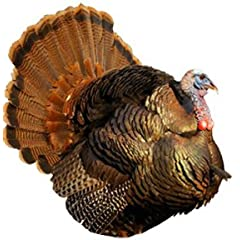 Montana Decoy Inc Punk Jake Turkey Decoy Ultra Realistic Hd Photography Simple Set Up by MONTANA DECOY INC